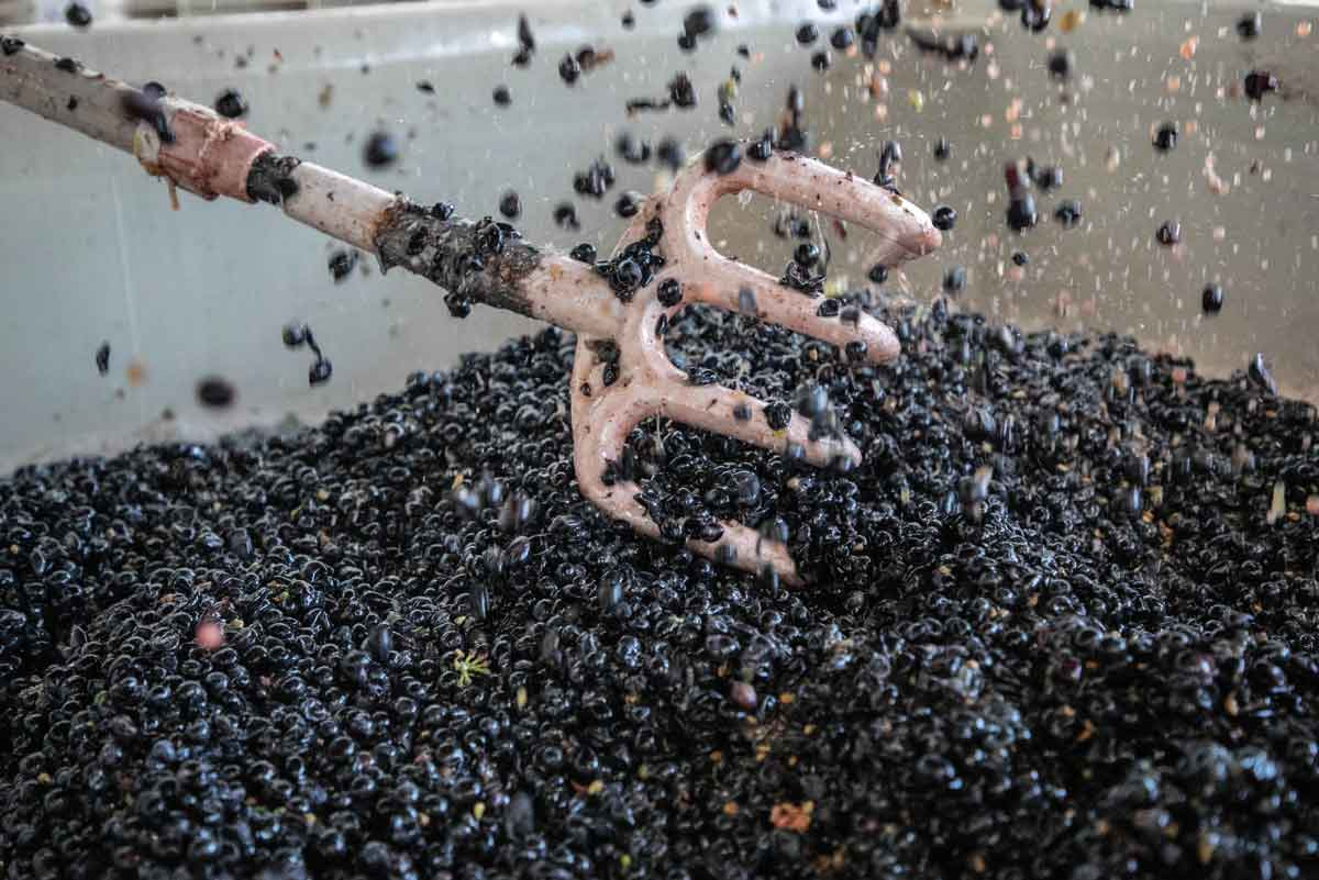 Hand-Sorting Grapes to Perfection